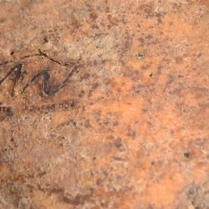 Monte Veronese DOP di malga
