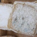 Caciofiore della campagna romana con coagulante di cardo