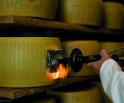 Parmigiano: marchiatura