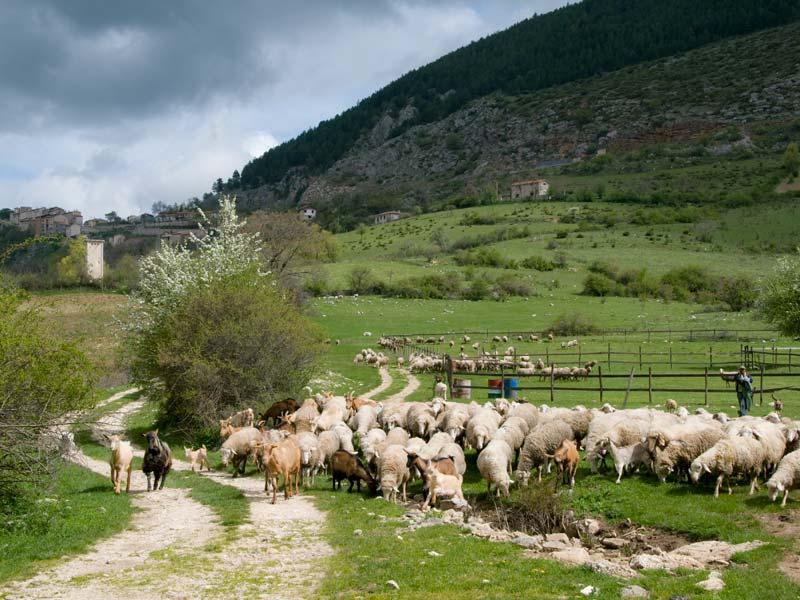 La pastorizia, un'attività indispensabile alla natura