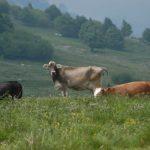 Caseifici di Alpeggio 2017,  formaggi sicuri e controllati