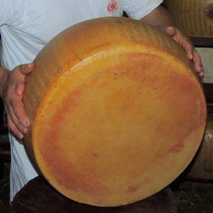 Quando il Parmigiano si chiamava Vernengo