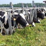 Caseificazione: trasformazione del latte in formaggio